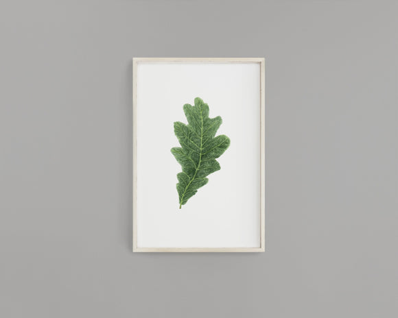 Watercolor Oak leaf Painting, Leaf Art, Fall Decor,  White Oak Leaf, Green leaf, Leaf decor - Emilie Taylor Art