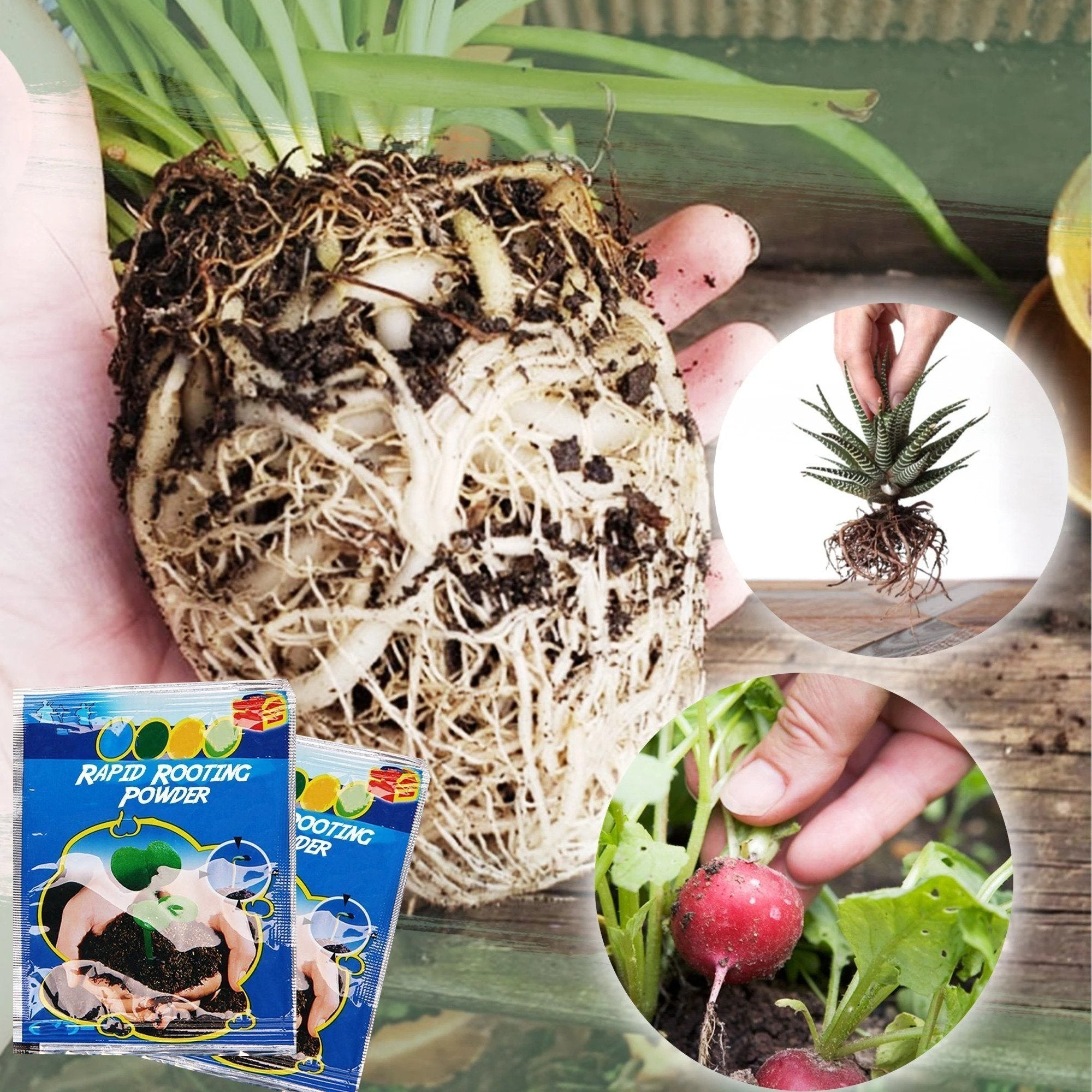 Rapid-Grow Rooting Powder