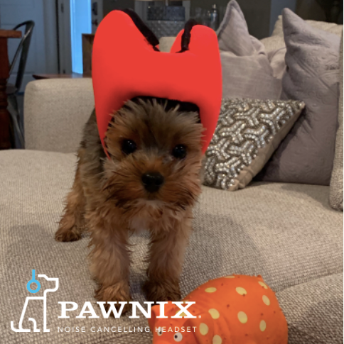 Little Dogs Hate Noises too, Love PAWNIX