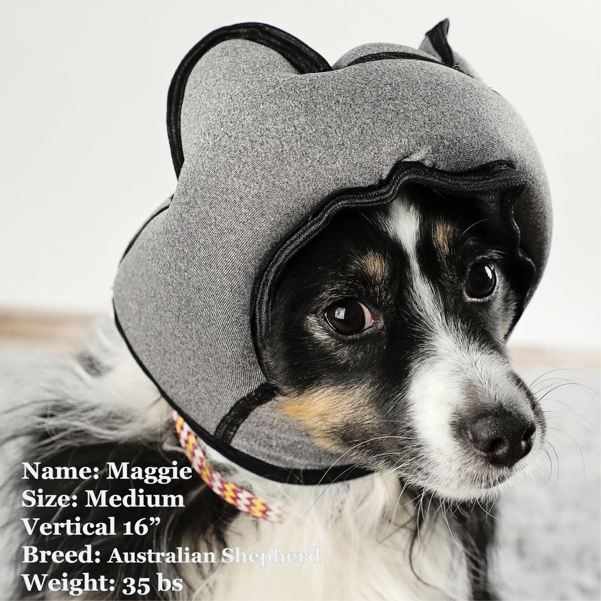 Maggie is a Shepherd in a Medium Grey PAWNIX Noise Cancelling Headset for dogs