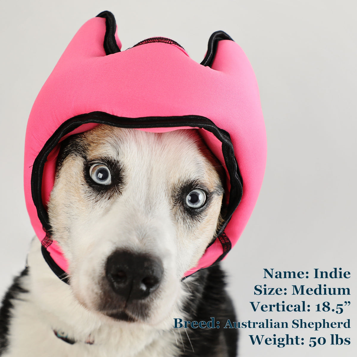Indie is a Shepherd in a Medium Pink PAWNIX Noise Cancelling Headset for dogs