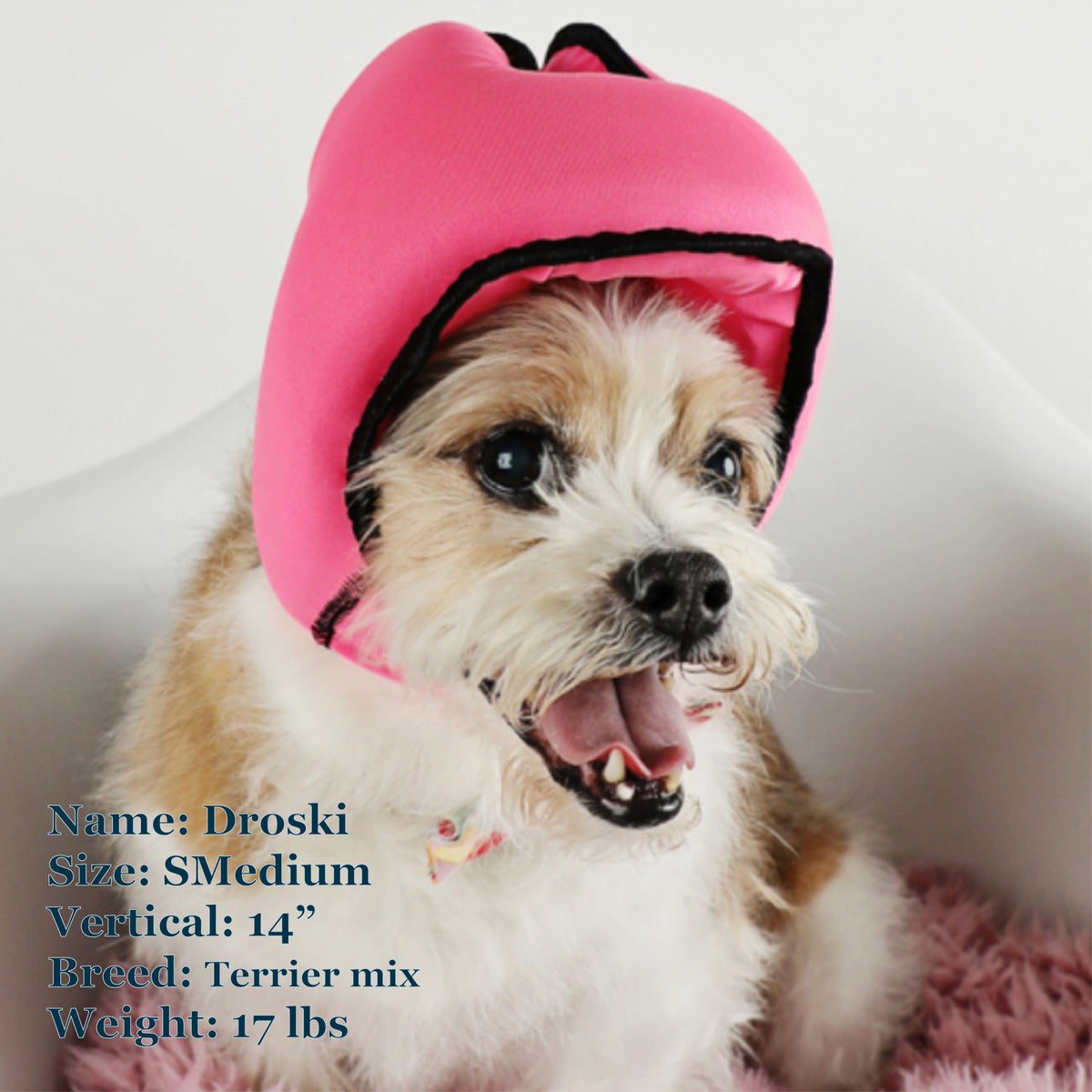 Droski is a Terrier Mix in a SMedium Pink PAWNIX Noise Cancelling Headset for dogs