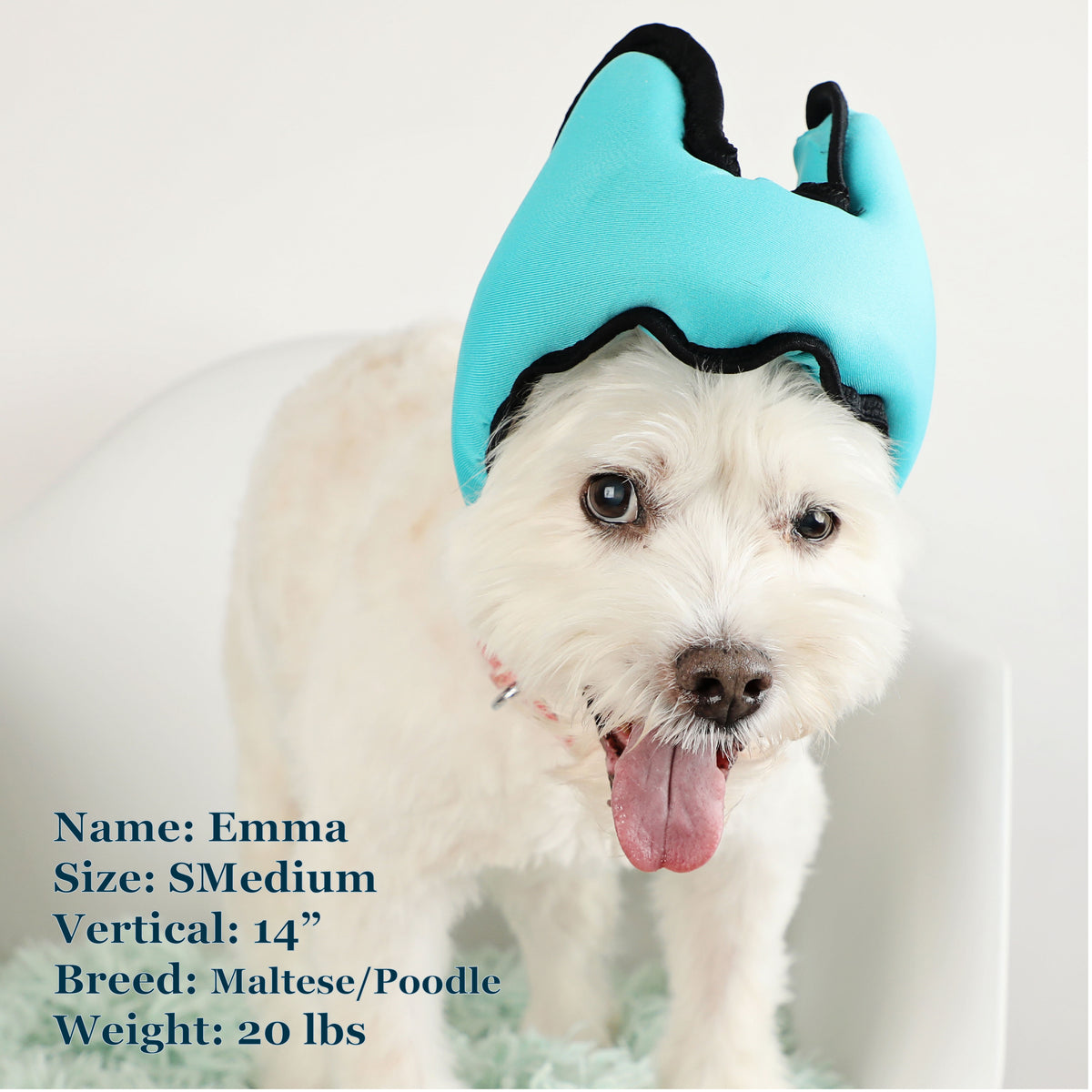 Emma is a Maltese Poodle Mix and can wear a Smedium or Medium Blue PAWNIX Noise Cancelling Headset for dogs