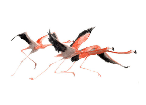 Flamingos - Limited Edition Print