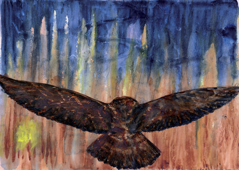 Barred Owl Leaving - Limited Edition Print