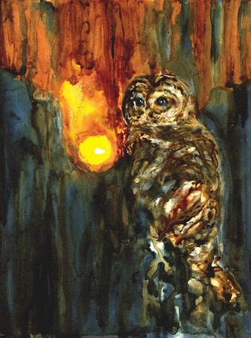 Barred Owl - Limited Edition Print