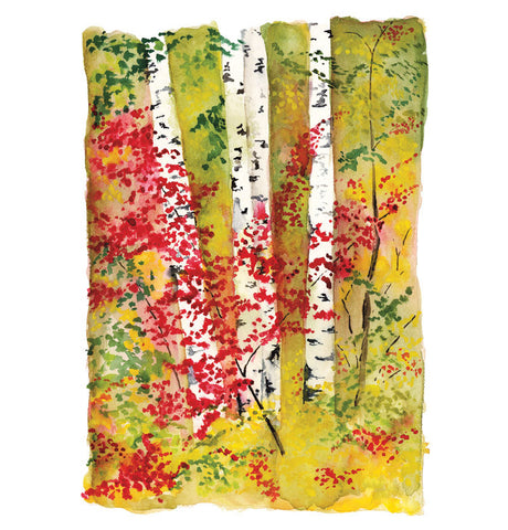 Birches II - Limited Edition Print