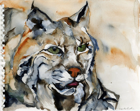 Bobcat Sketch - Limited Edition Print