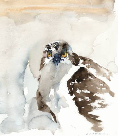 Brown Osprey – Limited Edition Print