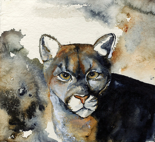 Florida Panther, Eyes - Signed Print