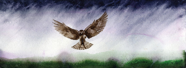 Great Northern Harrier Landing - Limited Edition Print