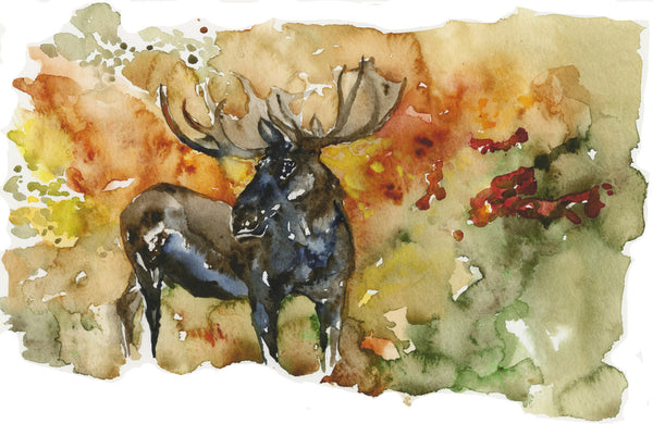 Moose Thinking - Limited Edition Print