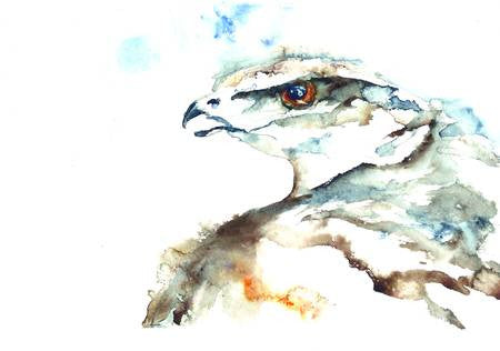 Raptor Looking – Limited Edition Print