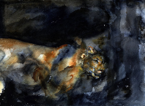 Cougar Shadows - Signed, Limited Edition Print