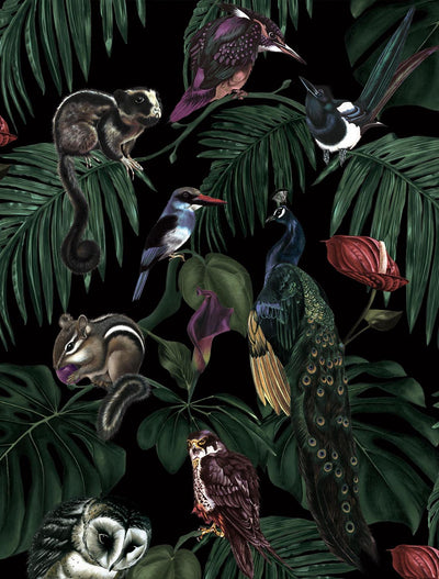 witch and watchman Amazonia Dark tropical animal Wallpaper closeup