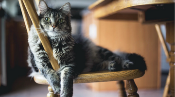 4 Tips for Finding the Best Food for Your Cat
