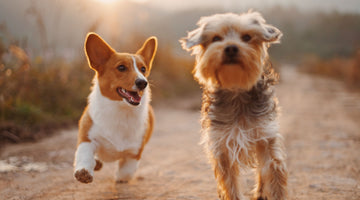 4 Ways to Keep Your Dogs Safe and Entertained in Your Yard
