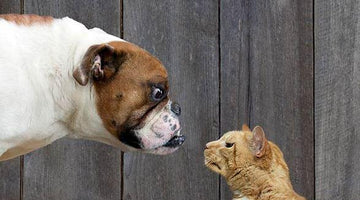Are Dogs or Cats Smarter?