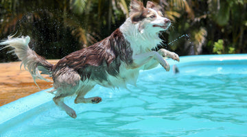 Pools & Pooches: 6 Summer Safety Tips for Pet Parents