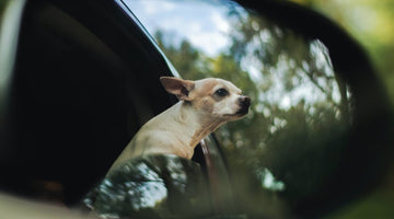 From Scratches to Shedding: Protecting Your Car From Incidental Pet Damage