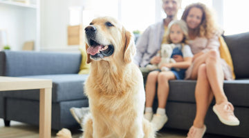 Have a Family Pet? Here's What you Need to Know