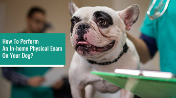 How to Perform an In-home Physical Exam on Your Dog?