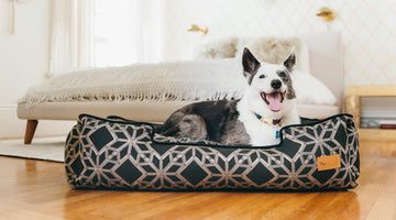 5 Best Furniture Materials You'll Appreciate if You're a Pet Owner