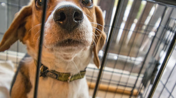 Should You Crate Train Your Dog?