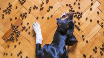 How To Choose a Pet Food for Your Dog