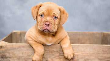 Are You Ready for a Dog? Consider These 8 Factors First