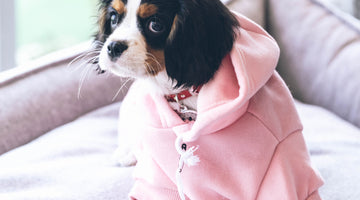 Why Clothing Your Pets is So Important