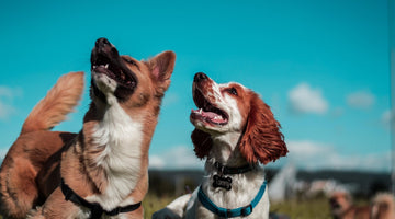 How To Achieve Healthy Dog to Dog Interaction