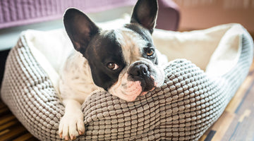 How to Cover Up Pet Smells in Your Home