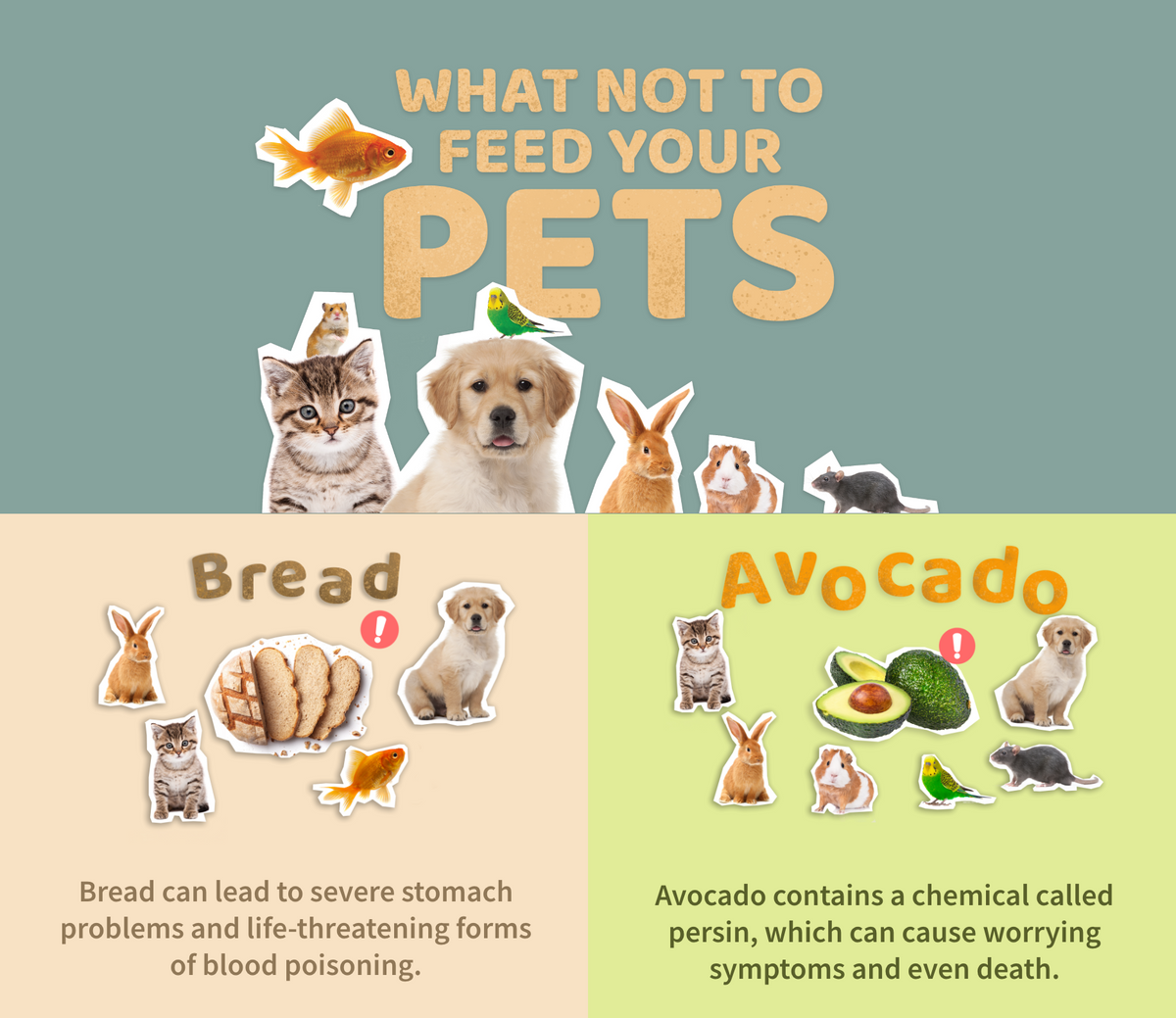 Common Human Foods That Can Be Harmful For Pets P L A Y