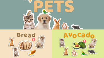 Common Human Foods That Can Be Harmful For Pets