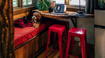 Distractions For a Lonely Dog: Entertain Your Pup While You're Away With These Genius Ideas