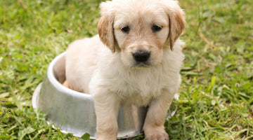 Sit. Stay. Pay. Managing the Cost of Pet Ownership