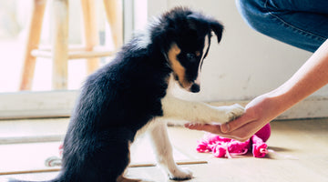 4 Commands to Teach Your New Puppy