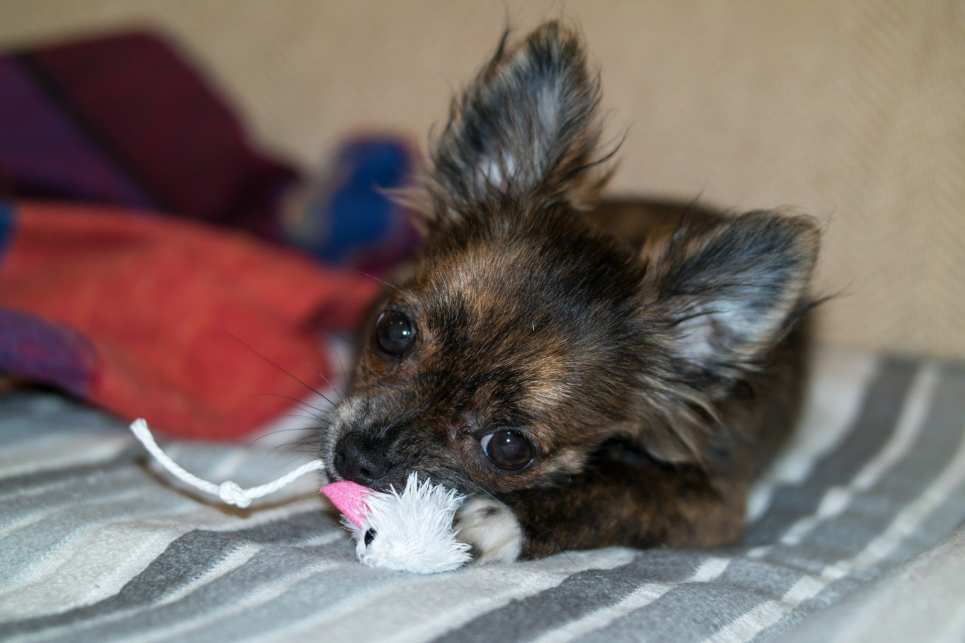 How to Choose the Right Toys for Your Dog?