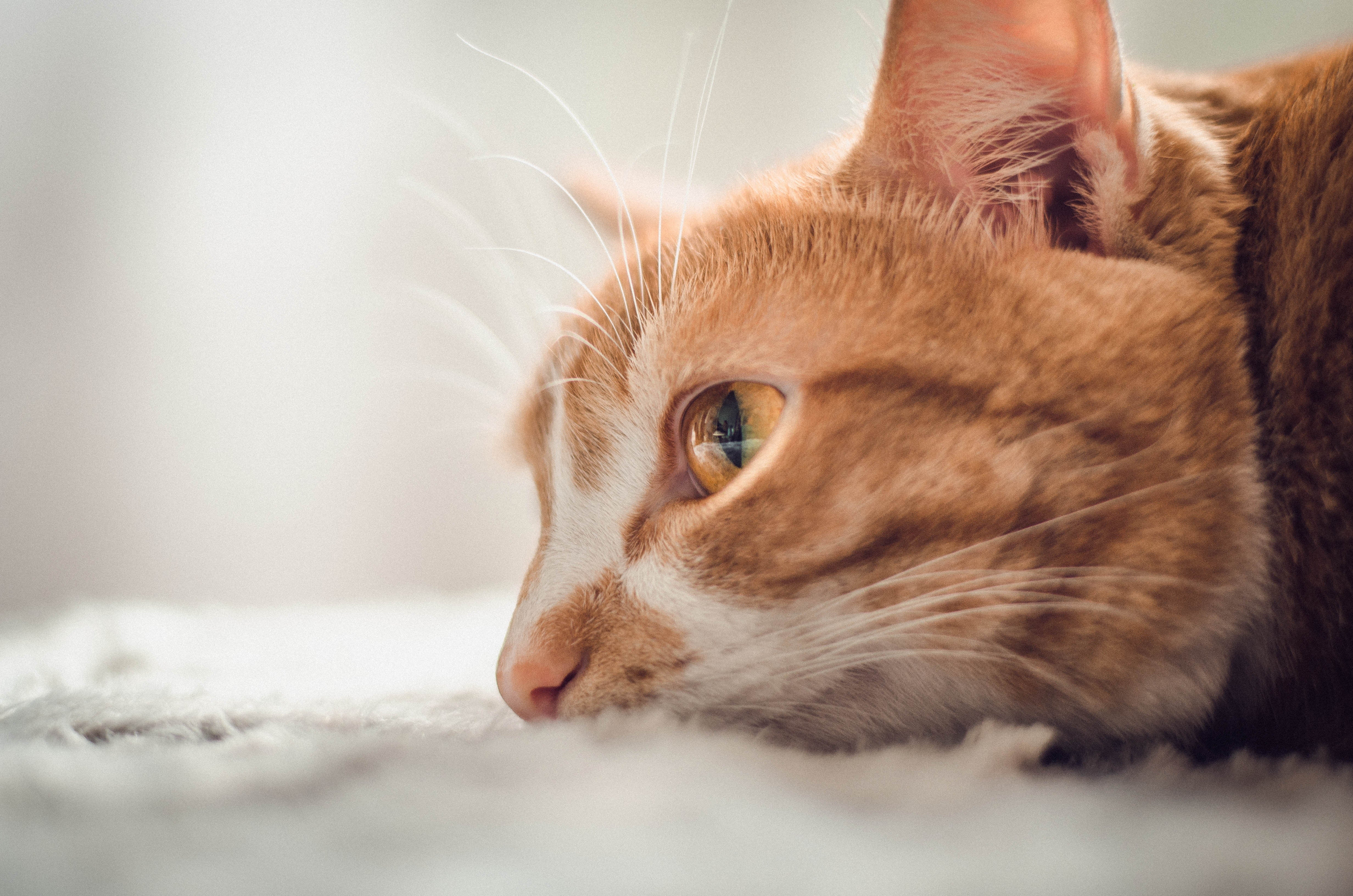 How can you tell if your cat's not well?