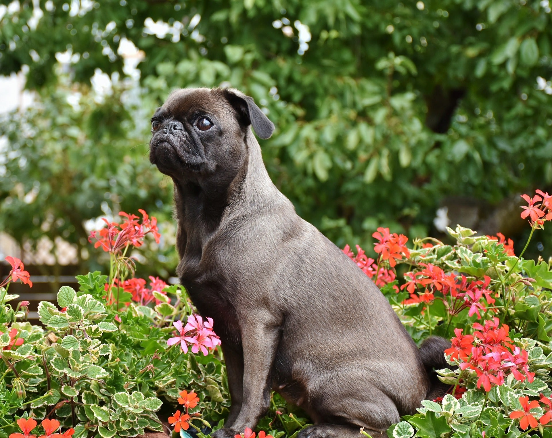 How to Create a Dog-Friendly Garden