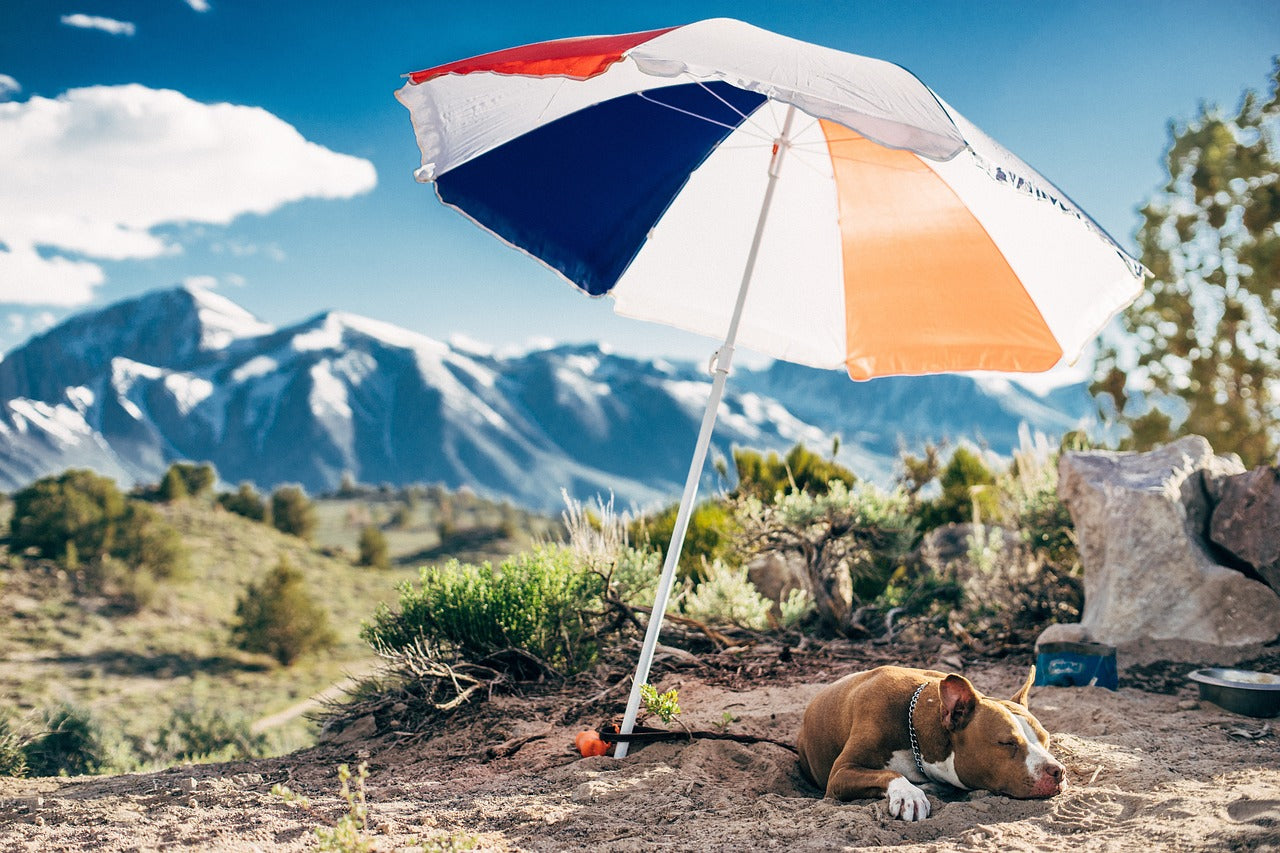 Top 5 Pet Outdoor Accessories to Make Your Life Easier