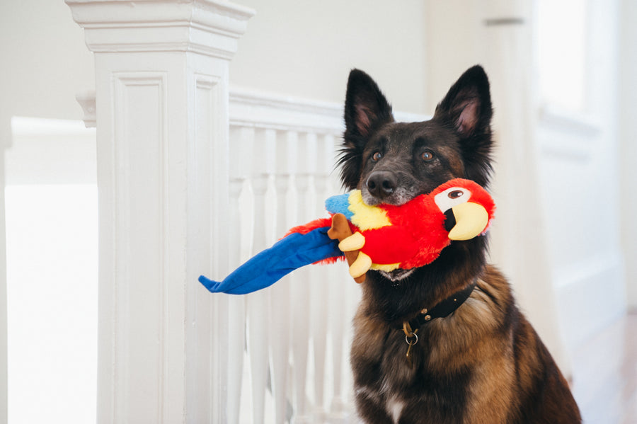 Gallery: Fetching Flock Parrot Toy PY7087DLF
