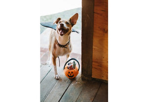 Howl-o-ween Treat Basket