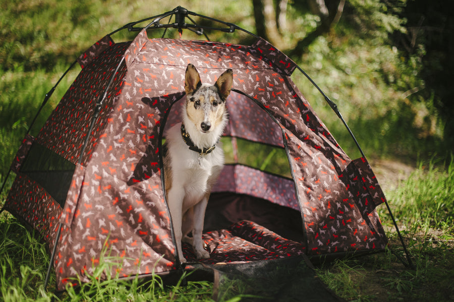 Gallery: Outdoor Dog Tent PY6006ASF