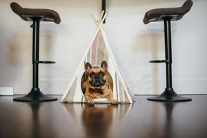 Gallery: Horizon Pet Teepee PY6011CUF