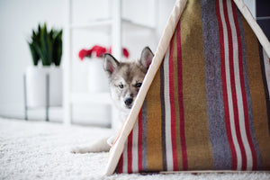 Gallery: Horizon Pet Teepee PY6011BUF