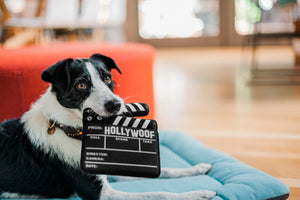 Hollywoof Cinema Collection