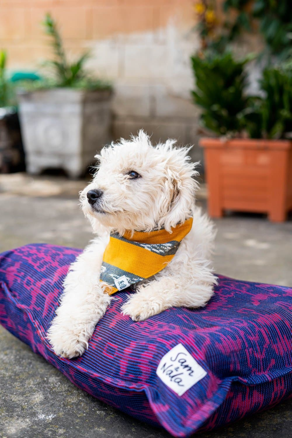 "Medium Dog Beds - Garden Party (27"" x 36"")"