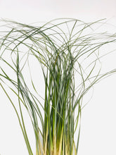 Load image into Gallery viewer, Bear Grass